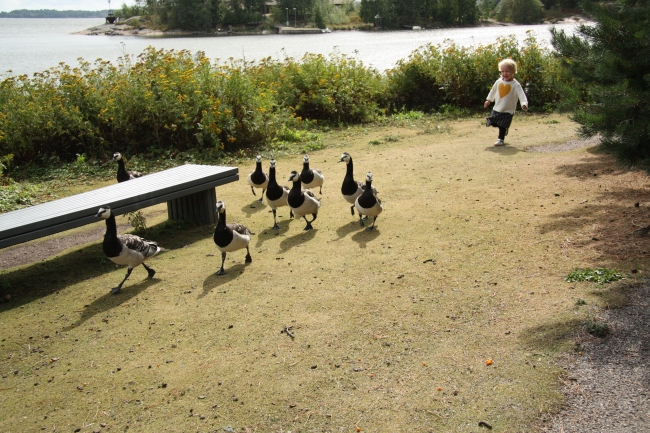 bella and geese