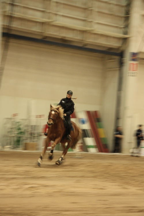 police horse show speed