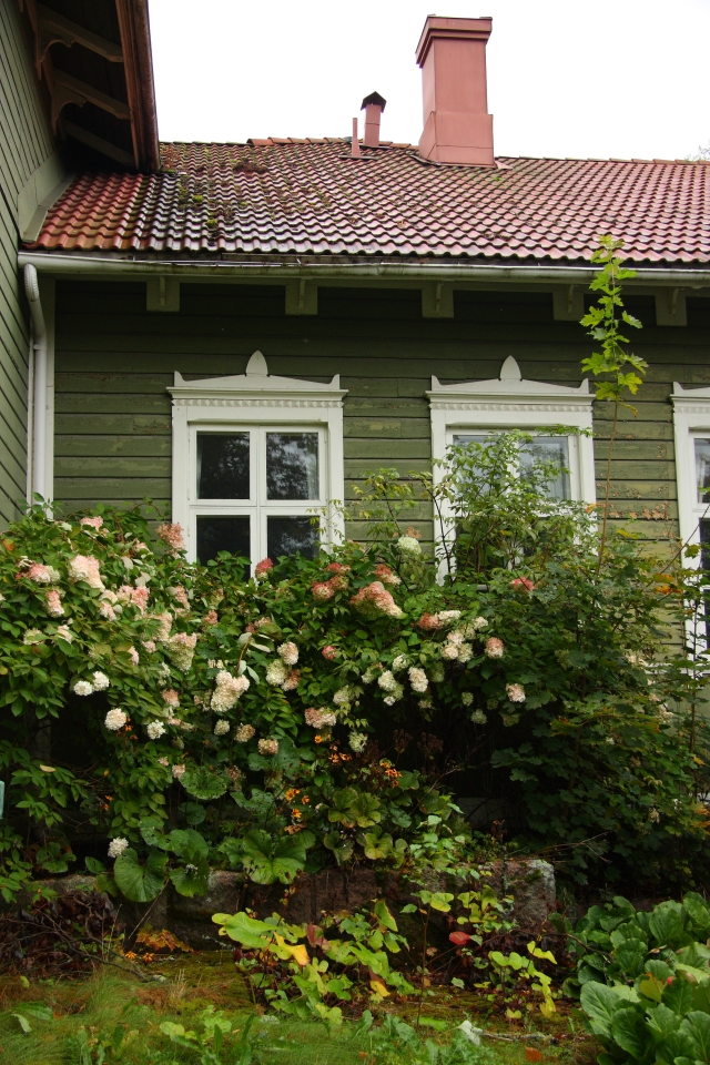 hortensia hydrangea