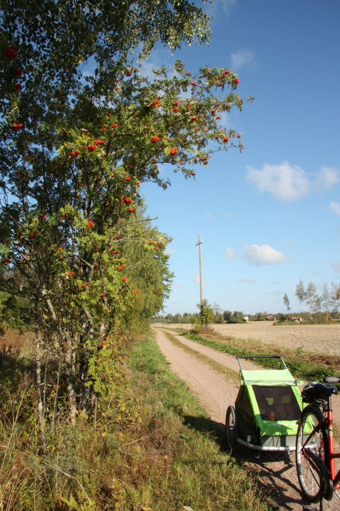 rowan berries and bike