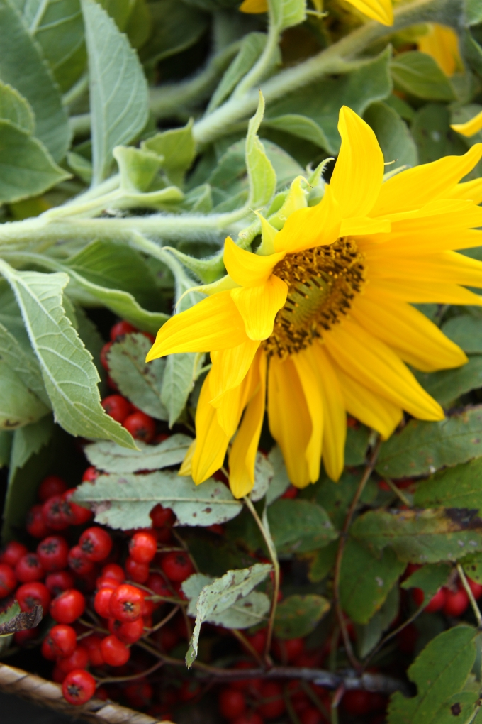 sunflowers and berries
