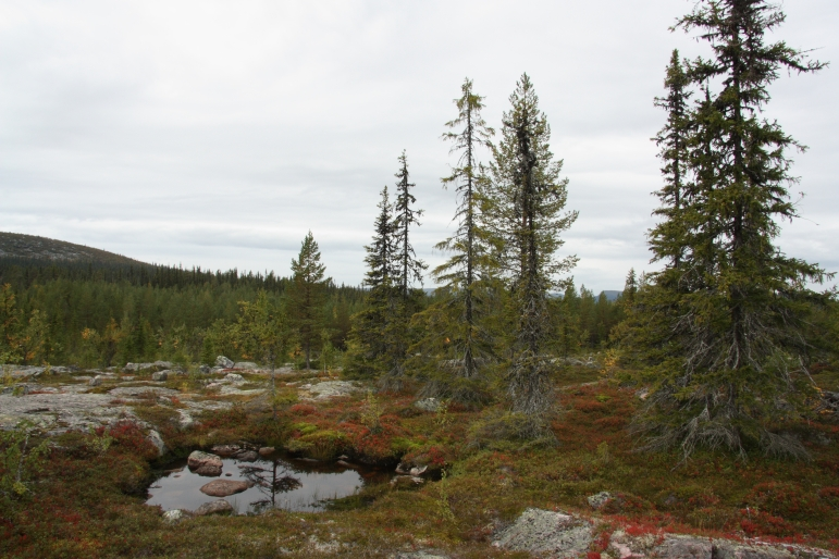swedish lapland landscape