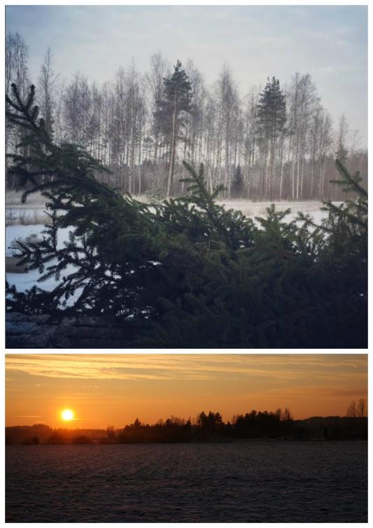 Christmas leaving and january light